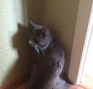 Bir Rus kedisi