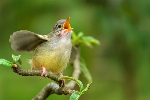 Kuş Şakımalarını Ayırt Etmek İster Misiniz?
