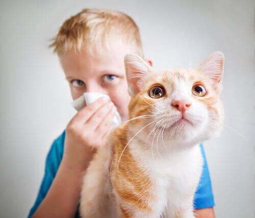 Kedi Alerjisi: Birçok İnsanı Neden Etkiliyor?