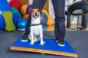 Spor salonunda bir köpek