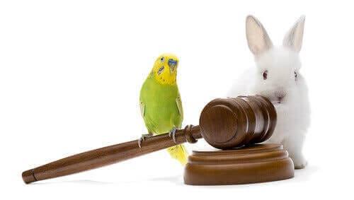 Yargıç tokmağı üstünde kuş ve arkasında tavşan