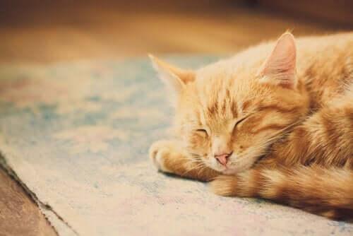 Kedilerin Çok Uyumalarının Nedenleri