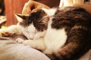 Uyurken okşanan bir kedi