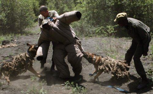 Afrika'da Yasa Dışı Avcılık İle Savaşan Köpekler