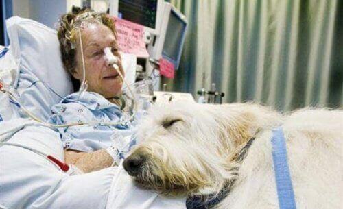 yaşlı hasta ve tıbbi müdahale köpekleri
