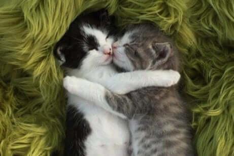 uyuyan yavru kediler