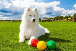 Zeka oyunu önünde bir köpek