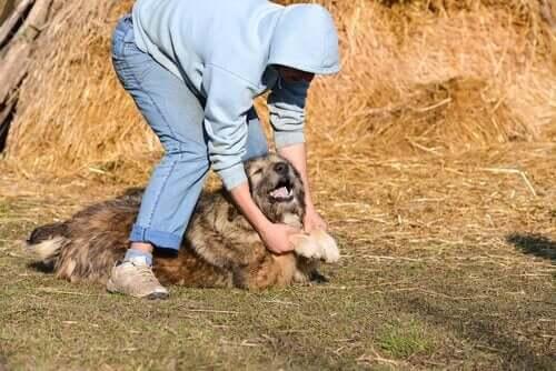 Köpekler De Aile İçi Şiddet Kurbanı Olabilir