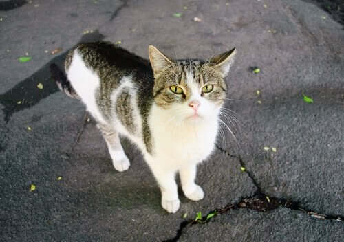 Terk Edilmiş veya Kayıp Bir Ev Kedisi Bulursanız Ne Yapmalısınız?