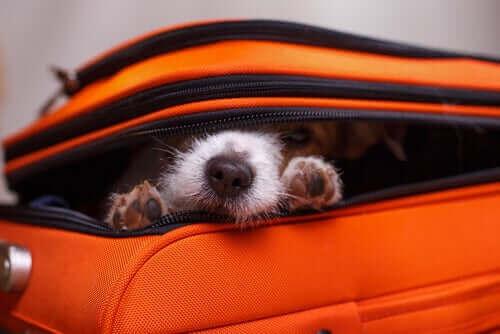 Köpeklerde Saklanma Davranışı: Köpekler Neden Saklanır?