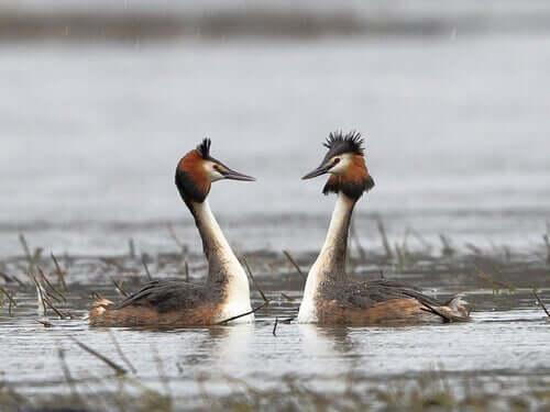 Kuşların yakınlaşması