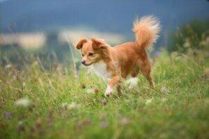Yeşilliklerde koşan bir köpek
