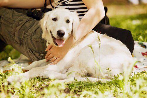 sahibiyle çimlerde oturan beyaz golden köpek