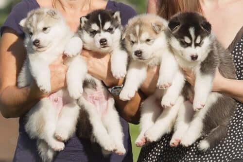 elde tutulan dört adet yavru köpek