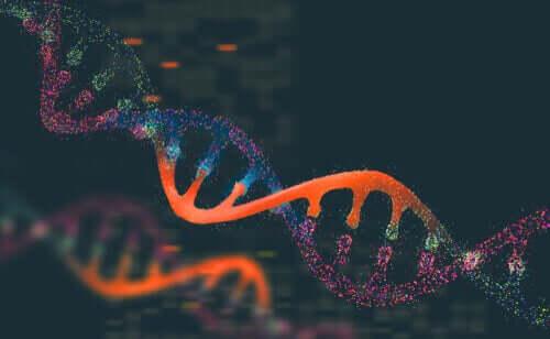 Hayvan Nüfusu Genetiği Nedir?