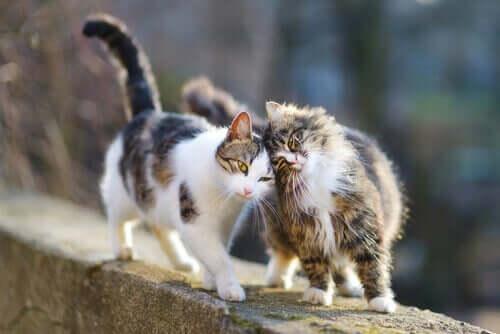 İki kedi duvarın üstünde oyun oynuyor