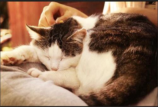 Kedinizi Sevmenin En İyi 3 Yolu