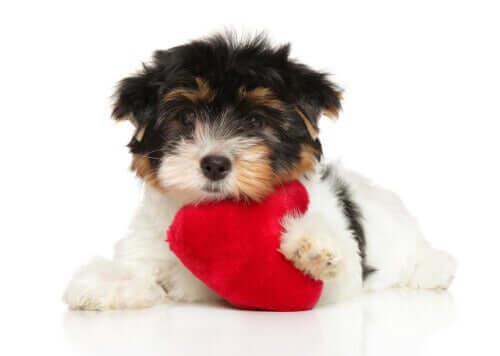 Köpeğinizin Kalp Sağlığı: İşinize Yarayacak 6 İpucu