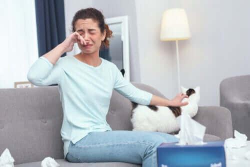 Kedi Alerjisi Olanlar İçin 12 Önemli İpucu