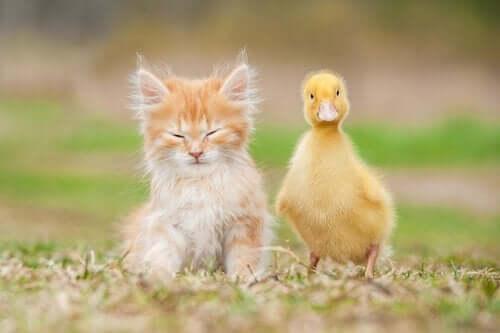 Hangi Hayvan Dostlarımız Evcil Olabilir, Hangileri Olamaz?