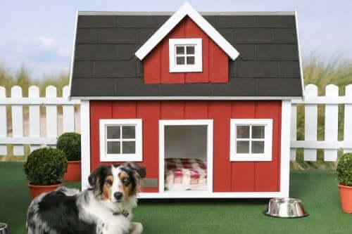 kırmızı cepheli köpek evi