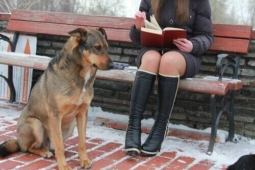 Üniversite Köpekleri