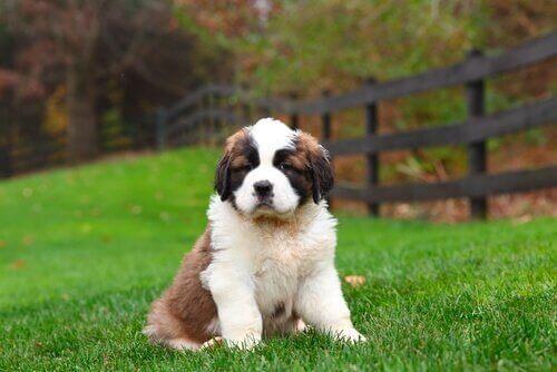 Köpekler için Önemli İki Besin Maddesi