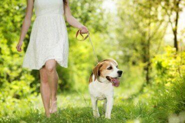 Köpeğiniz ve Siz Aynı Kalp Atışına Sahip Olabilirsiniz