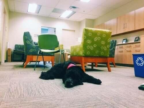 Güney Kaliforniya Üniversitesi'ndeki Profesör Köpek