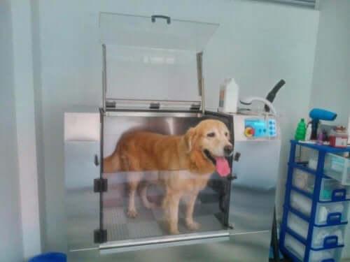 Köpek Yıkama Makineleri Nasıl Çalışır?