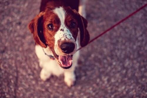 Dünyada Köpek Nüfusu En Fazla Olan Ülkeler