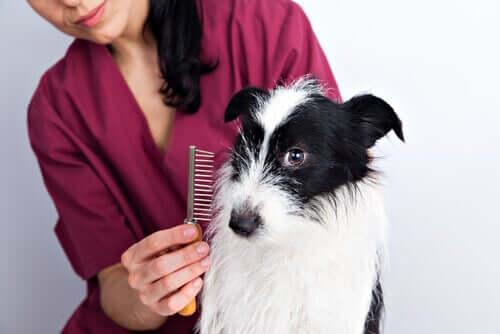 Köpeğinizin Tüy Bakımı İçin Bazı İpuçları