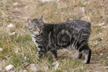 çimlerdeki kedi