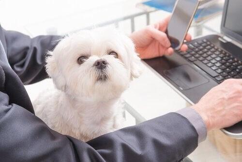 laptopta çalışan sahibi ve köpeği
