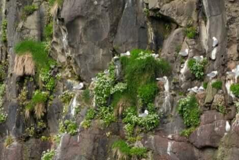 martı yuvaları