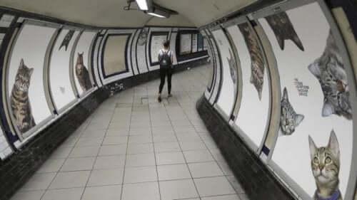 metrolardaki kedi resimleri ve Londra metrosunda kediler