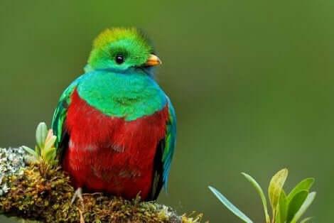 parlak quetzal kuşu