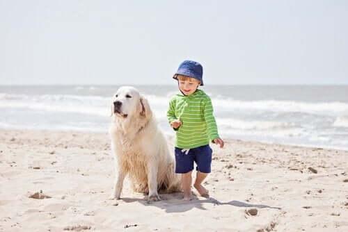 plajda duran köpek ve çocuk