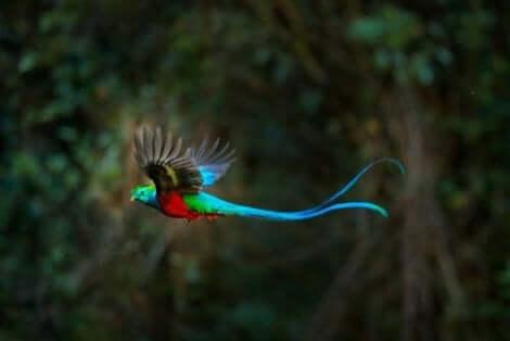 uçan quetzal kuşu