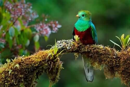 Quetzal: İkonik Bir Güney Amerika Kuşu