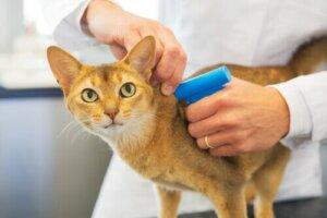 Kediler İçin Mikroçipler: Bu Bir Zorunluluk Mu?