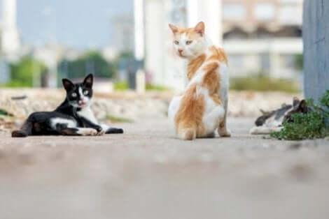 iki sokak kedisi