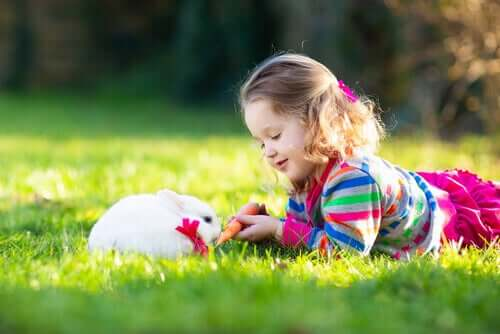 Tavşan Terapisi Nedir Ve Nelerden Meydana Gelir?