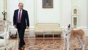 Vladimir Putin'in köpeği