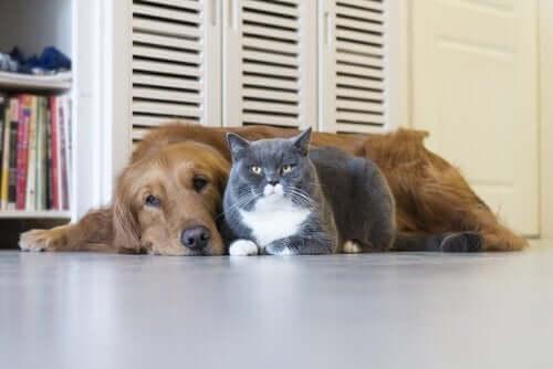 yerde yan yana yatan kedi ve köpek
