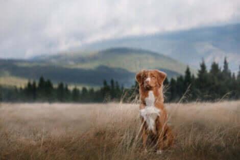 açık havada oturan köpek