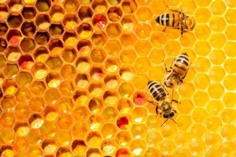 arılar ve tümtoplumsallık