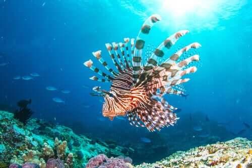 Aslan Balığı İstilası: Akdeniz'in Yeni Sakini