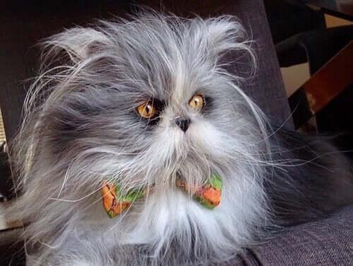Kedi mi Köpek mi? Sosyal Medyanın Yıldızı, Atchoum ile Tanışın
