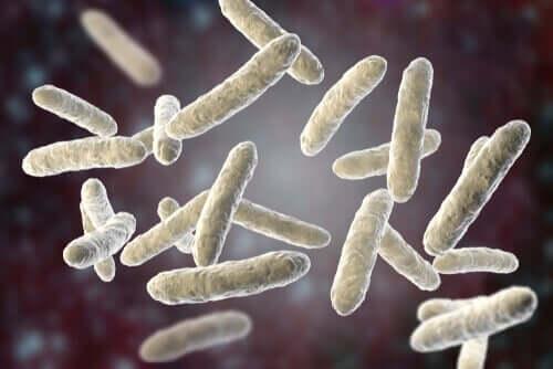 Evcil hayvanlarda bakteriyel enfeksiyonlar.